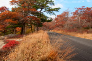 Beautiful fall colors by the country road.